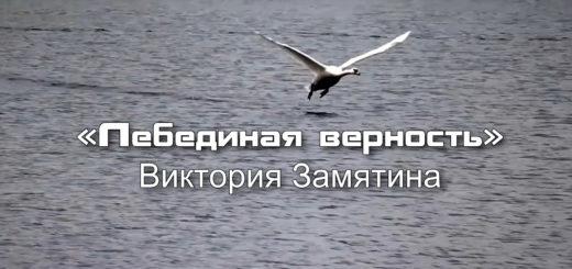 ЗАСТАВКА Виктория Замятина – «Лебединая верность» (муз. – Евгений Мартынов, сл. – Андрей Дементьев)